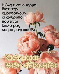 Good Morning, Wish, Quotes, Wallpapers, Buen Dia, Quotations, Bonjour, Wallpaper, Good Morning Wishes