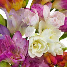 FiftyFlowers.com - Farm Mix Assorted Colors Freesia Flowers