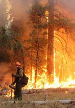 Rim Fire Official Information Wildland Firefighter, Volunteer Firefighter, Fire Dept, Fire Department, Granite Mountain Hotshots, In Harm's Way, Wild Fire, Fire Apparatus, Show Horses