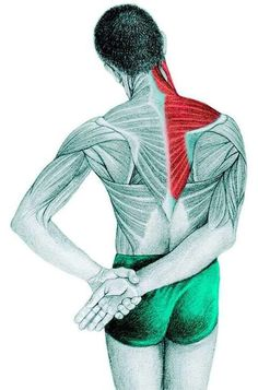 Anatomy of stretching: trapezius, supraspinatus, deltoid muscle Yoga Fitness, Yoga Gym, Muscle Fitness, Posture Fix, Stretching Exercises, Arm Stretches, Neck Exercises, Massage Therapy, Yoga Inspiration