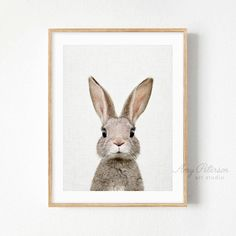 "Baby ""Rabbit"" Print, Baby Animal Woodland Nursery Animal Wall Art Woodland Animal Wall Art by Amy Peterson"