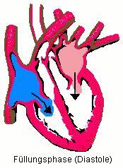 Das Herz