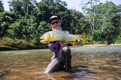 @redbeard landing a beautiful Golden Dorado in Bolivia.