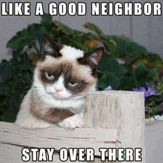 Like a good neighbor grumpy cat