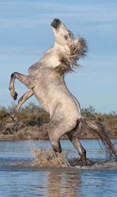 Remarkable Looking Wild Mustang. The Coloring is Somewhat Unusual, Dirty White.