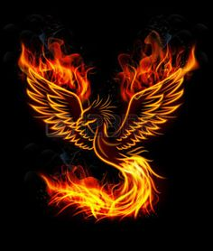 phoenix rising: Illustration of Fire burning Phoenix Bird with black background Illustration