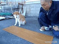 dog-helps-owner-in-diy-carpentry-work