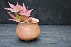 Wild clay pinch pot from Lockdoun Ceramics project Clay Pinch Pots, Ceramics Projects, Stoneware, Planter Pots, Beautiful, Ceramica