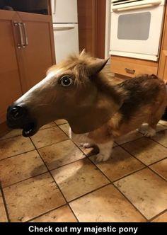"""I call my dog """"My pony"""" :)"""