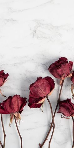 Wallpaper Nature Flowers, Flower Iphone Wallpaper, Phone Wallpaper Images, Flower Background Wallpaper, Gold Wallpaper, Galaxy Wallpaper, Screen Wallpaper, Wallpaper Backgrounds, Aesthetic Pastel Wallpaper