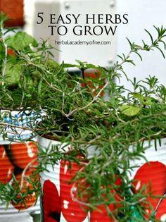 5 Easy Herbs You Can Grow 5 Easy Herbs You Can Grow herbsandoilshub. Five medicinal herbs that a Easy Herbs To Grow, Growing Herbs, Growing Gardens, Garden Plants, Indoor Plants, Balcony Garden, Vegetable Garden, Types Of Christmas Trees, Types Of Herbs