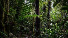 Hiking in the Cloud rainforest Mindo Ecuador