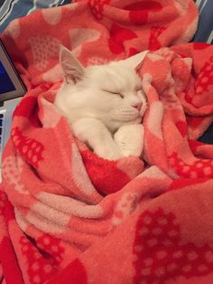 "pinkandinked: "" Sleepy kitty """