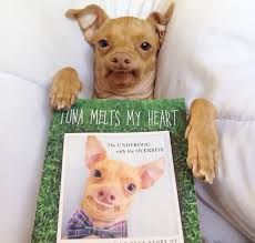 """We chat with his person, Courtney Dasher, about """"Tuna Melts My Heart"""" and how the photo book helps shelter dogs. Funny Dog Memes, Funny Dogs, Funny Animals, Shelter Dogs, Rescue Dogs, Animal Rescue, Tuna Dog, Dog Crossbreeds, Tuna Melts"""