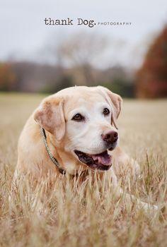 Amazing Inspiration for an aspiring pet photographer