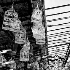 ©️ Albertine - Paris 4e - marché aux fleurs cages oiseaux  carré - Forum Instinct-Photo.fr
