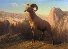 new to site Bierstadt Albert A Rocky Mountain Sheep Ovis Montana c.1879