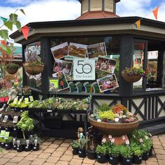 The nursery looks absolutely amazing for our 50th anniversary celebrations grand finale tomorrow be sure to come in and check out all the activity with Tony Van Loon taking the stage at approx. 1:30pm @vanloonsnursery @vanloonscafe #50years #celebration #grandfinale #bellarinepeninsula #wallington #comevisitus #nursery #cafe by vanloonscafe http://ift.tt/1JO3Y6G