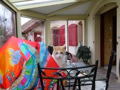 Parapluies et animaux...