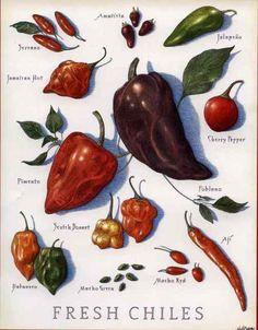 Chiles frescos tips de chiles Mexico - types of chillis fesh chillis