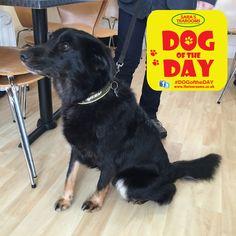 Spike Great Yarmouth, Dog Friends, Dog Days, Dogs, Animals, Animaux, Doggies, Animal, Animales