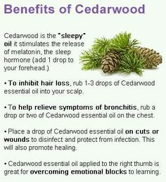 Cedarwood Young Living