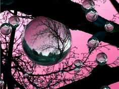 Reflection of beautiful sunset in water droplets make for pink bubbles. Bubble Balloons, Pink Bubbles, Blowing Bubbles, Dew Drops, Rain Drops, Fotografia Macro, Water Droplets, Foto Art, All Nature