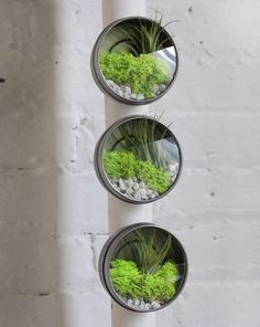 Looking for a great way to add some Air Plants into your home decor? Then check out our newest collection of Awesome Air Plant DIY Projects! Mini Terrarium, Air Plant Terrarium, Air Plants, Indoor Plants, Garden Diy On A Budget, Micro Garden, I Spy Diy, Moss Garden, How To Preserve Flowers