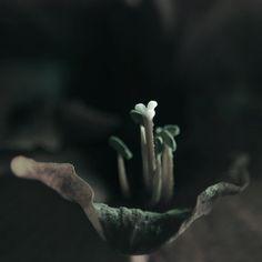 Still Life Flower Photography Night Bloom Dark. $30.00, via Etsy.