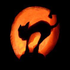 """""""Cat. Meow."""" Pumpkin Carving"""