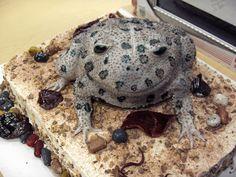 Toad Cake — Animal