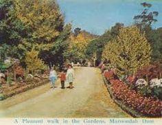 Image result for healesville park