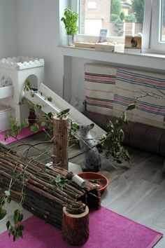 Such a pretty neat looking bunny room. Pic: Rabbitats.org