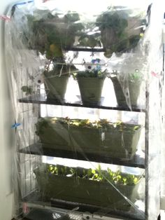 DIY Greenhouse...using a metal shelf, two clear shower curtains and some clothespins.