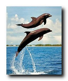 Wow! Love it! This beautiful wall poster will definitely helps in creating a bright and cheerful ambiance into your home or any space wherever you want to use this poster. This stunning wall poster captures the image of Bottle nose dolphins jumping into the ocean looking very attractive is sure to grab lot of attention. Hurry up and grab this wonderful wall poster for its durable quality and high degree of color accuracy.