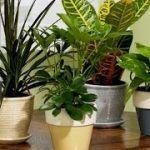 Cómo cuidar y mantener las Plantas de Interior (Dr. Matta) – TvAgro por Juan Gonzalo Angel