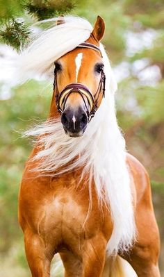 A beautiful horse
