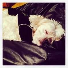 Boa noite! #dog #dogs #sleep #sleepingdog #cão #cachorro