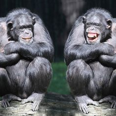 Neuroscientists are discovering that humans have far more in common with other animals than we ever imagined. Find out more in this month's State of the Ark: http://ospa.me/1nMvBoa  #animals #laughter #loveanimals #wildlife #funny #animalbehavior