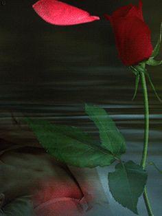 Rose petals--he loves me