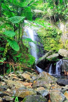 El Yunque Rain Forest Tours: Things to Do in Puerto Rico