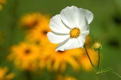 Flower, Macro, Nature, Bud pixabay.com