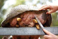 Stomatolog i Hipopotam - Gazeta Dentysty