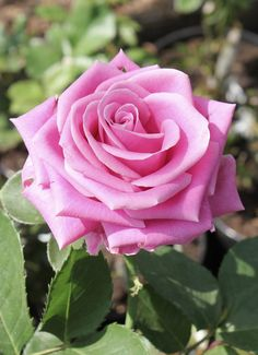 #Universal #Waldquiz #Nature #flowers