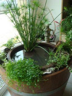 Mini bassin dans demi tonneau mini bassin et plantes d 39 eau pinterest minis - Bassin dans demi tonneau limoges ...