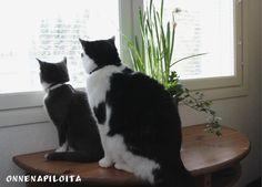 Lifestyle- blogi, sisältää juttuja puutarhasta, käsitöistä, sisustamisesta ja hyvinvoinnista.