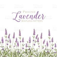 Wreath of lavender flowers royalty-free stock vector art