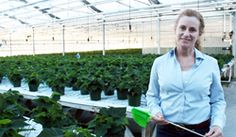 Dr. Melanie Yelton at work in a LumiGrow customer's greenhouse. http://www.stadeatools.com/