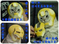 Hell Yeah, Citrus!: Grapefruit Iron Man Mask For Cat