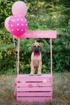 Pink Ribbon Puppies - Great Dane [photography by thank Dog. photography]